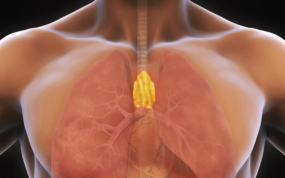 Diabète de type 1 : le rôle du thymus n'est pas celui que l'on croyait !